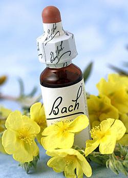 Bach-virágterápia2