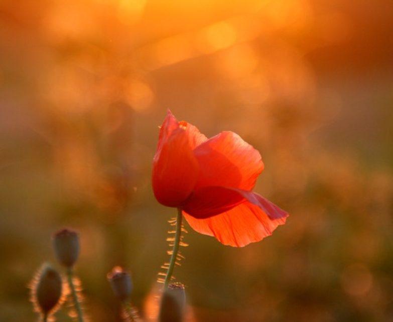 Áldott Nyári Napfordulót! – Tűz szertartás